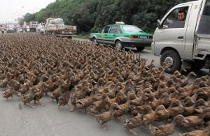 Manifestación masiva en contra de Restaurander. Fuente